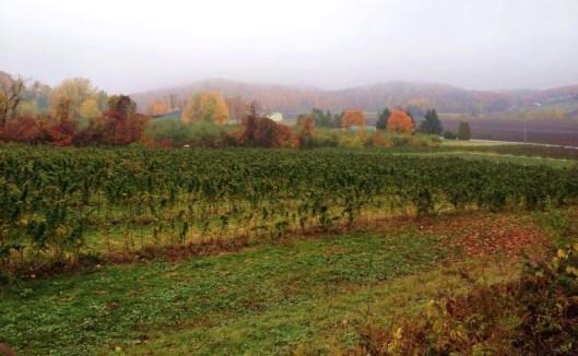 1 - raspberry field
